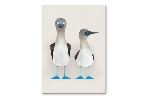 dieter-braun-poster-blue-footed-boobies