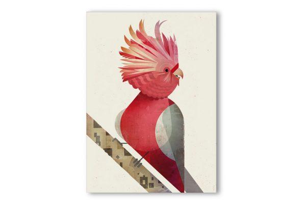 produktbilder-dieter-braun_galah-cockatoo