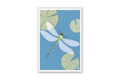 magnet-libelle